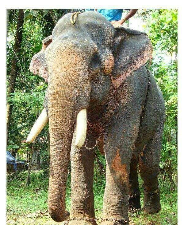 Elephant owners contact number kerala